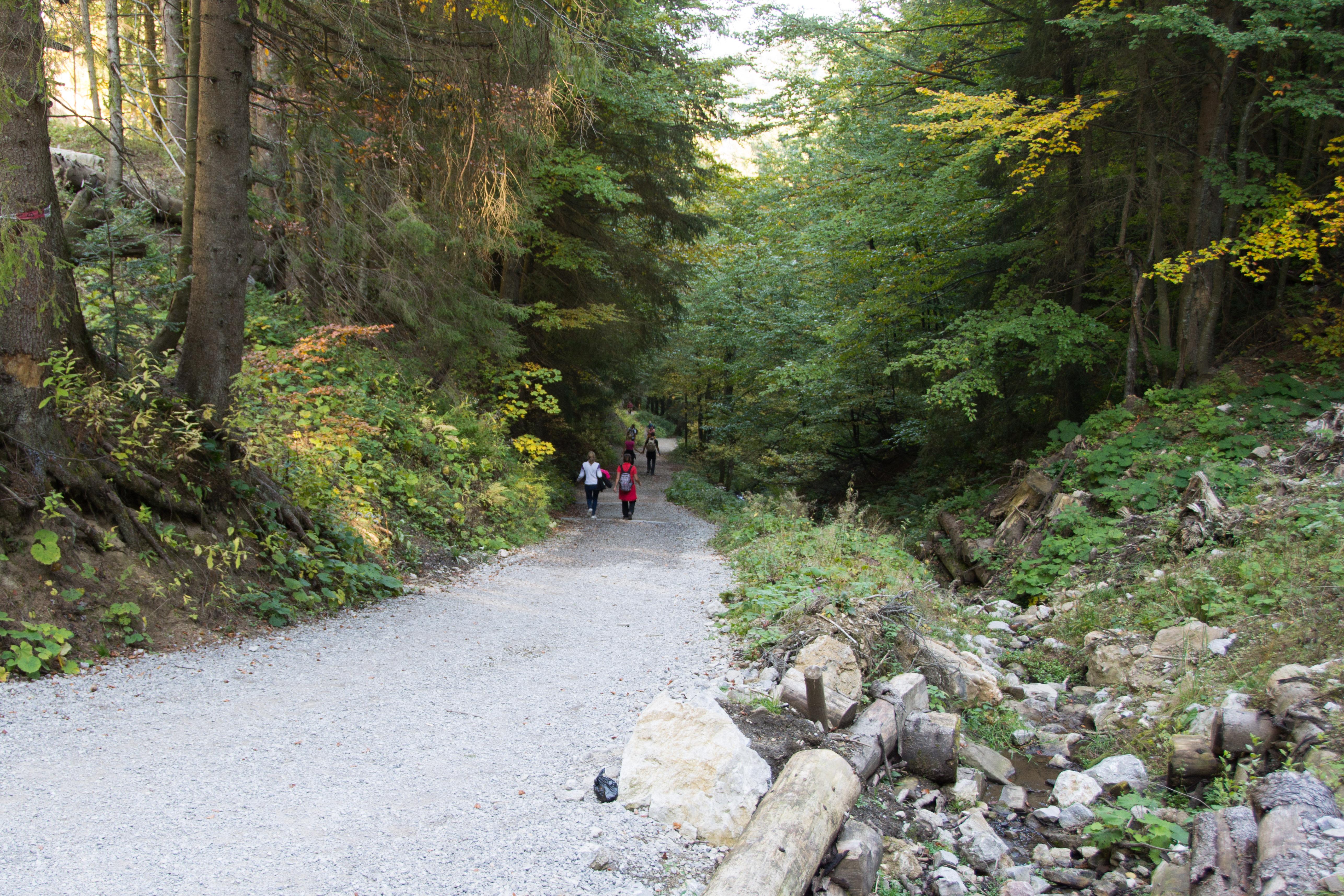 Beim Abstieg durch das Zeiselbachtal geht es zunächst recht steil bergab.