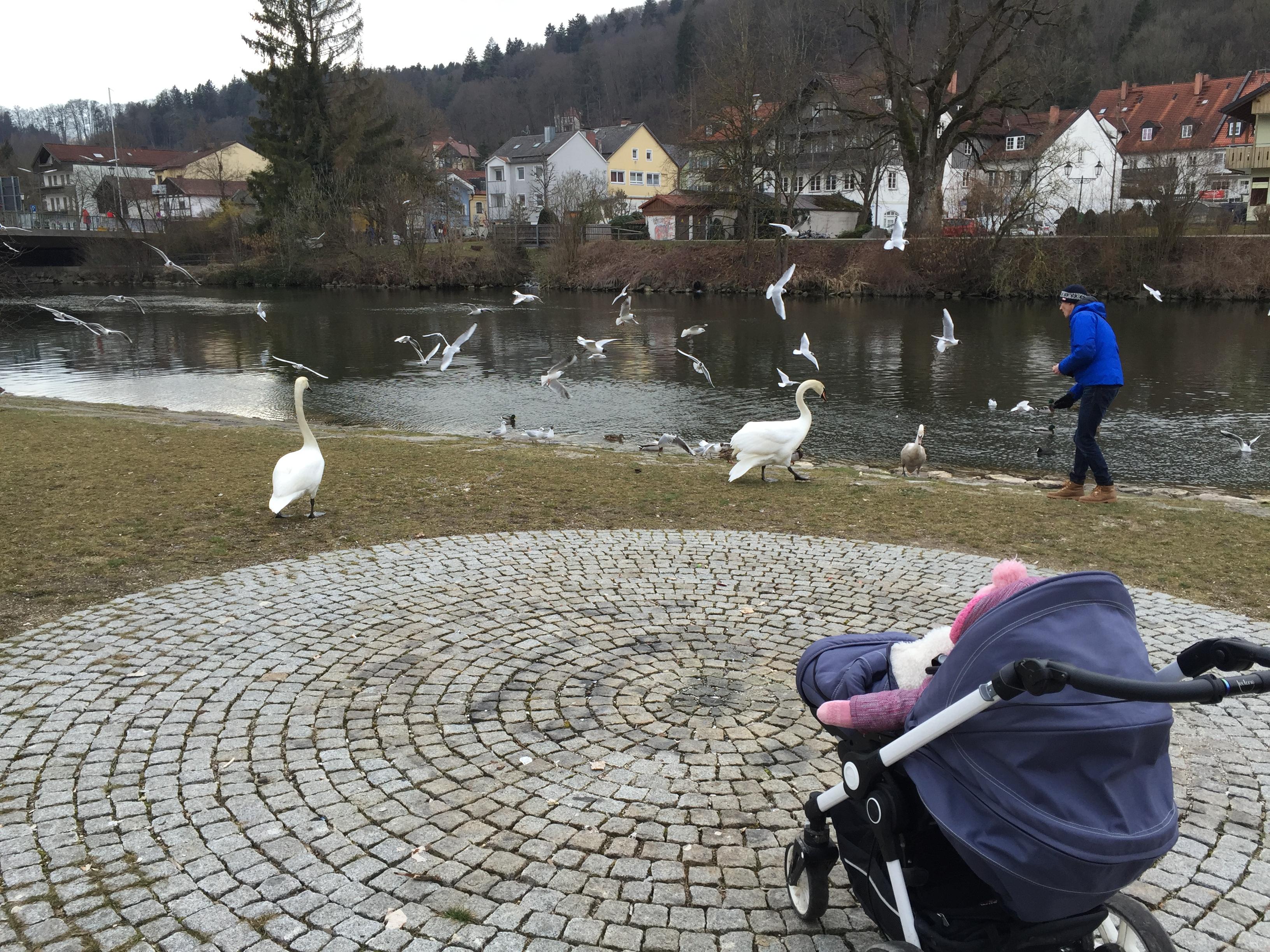 Ein kleines Spektakel: Enten, Schwäne und besonders gierige Möwen füttern.