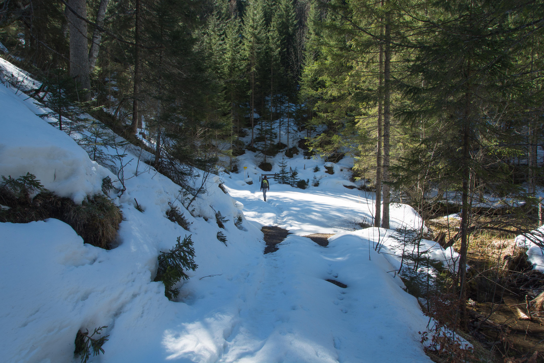 Im Schatten des Waldes sind wir auf ganz schön viel Schnee gestoßen