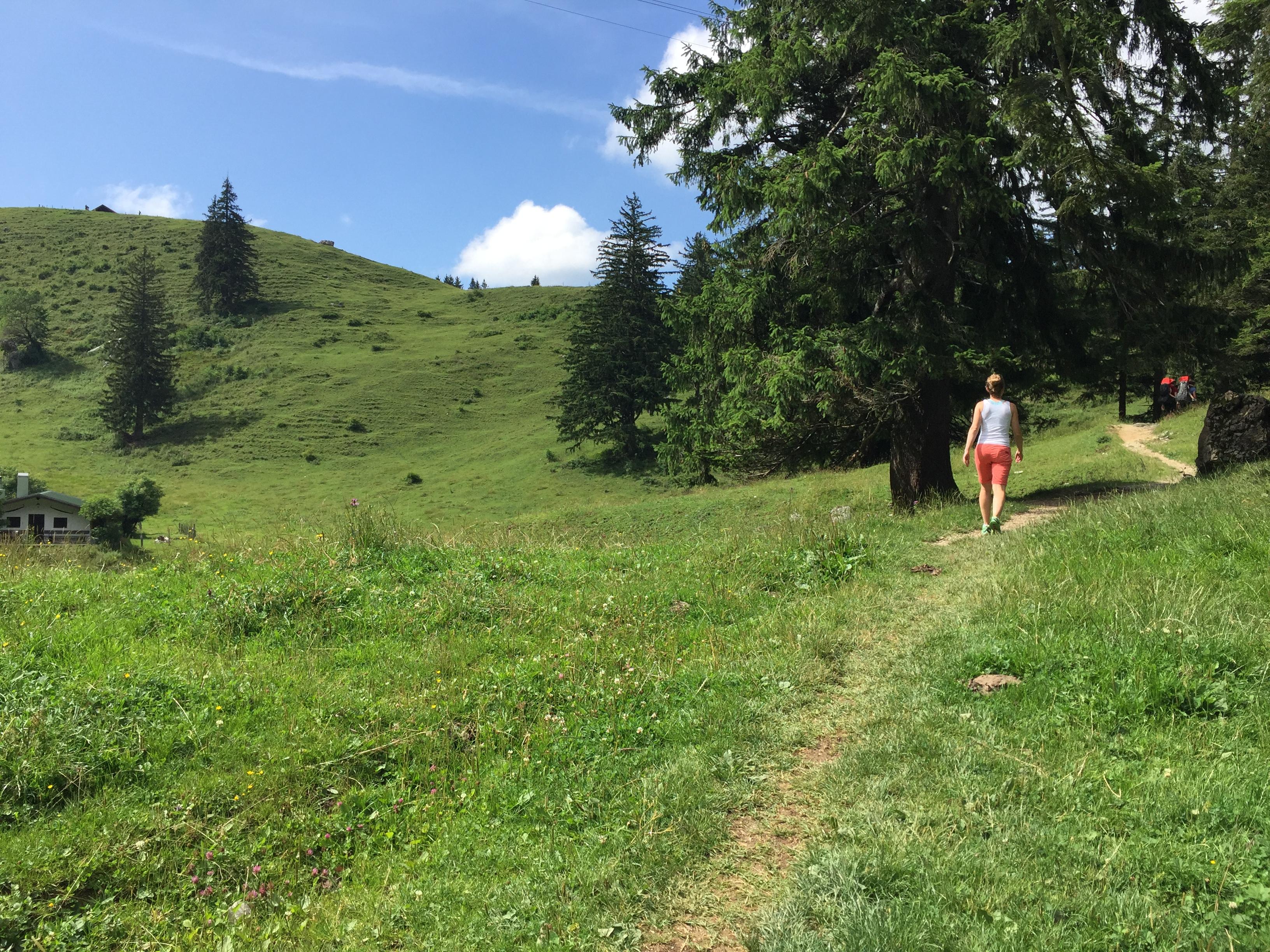 Auf dem Weg zur Bründling-Alm. Nach einem Waldstück geht es idyllisch an Alm-Wiesen bergauf.
