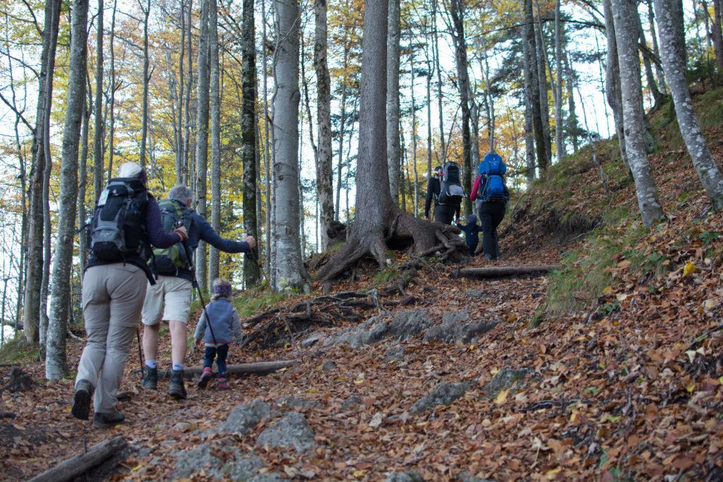 Wanderung auf den Jochberg durch den Wald