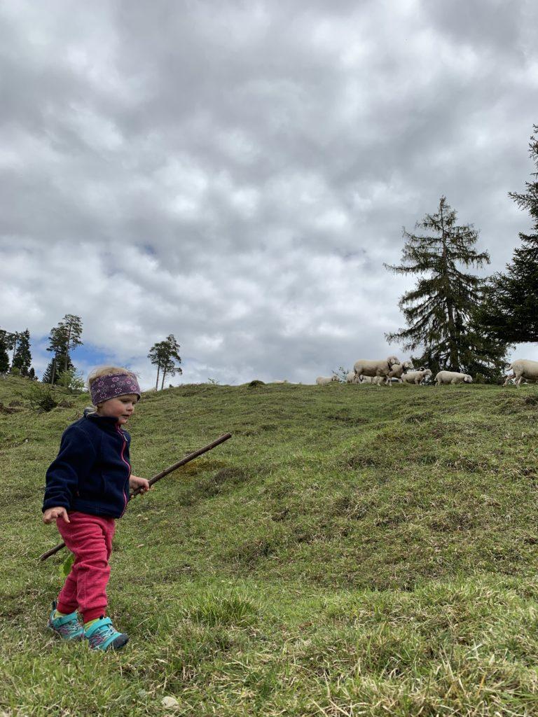 Schafe bei der Tannenhütte