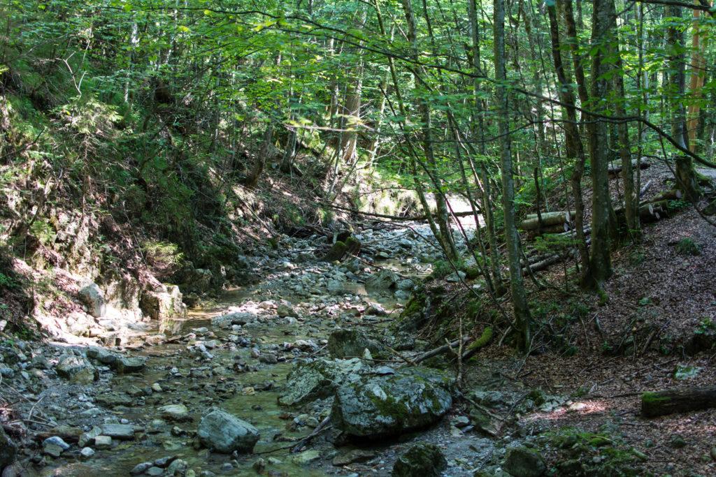 Entlang der Lainbach zum Lainbachfall