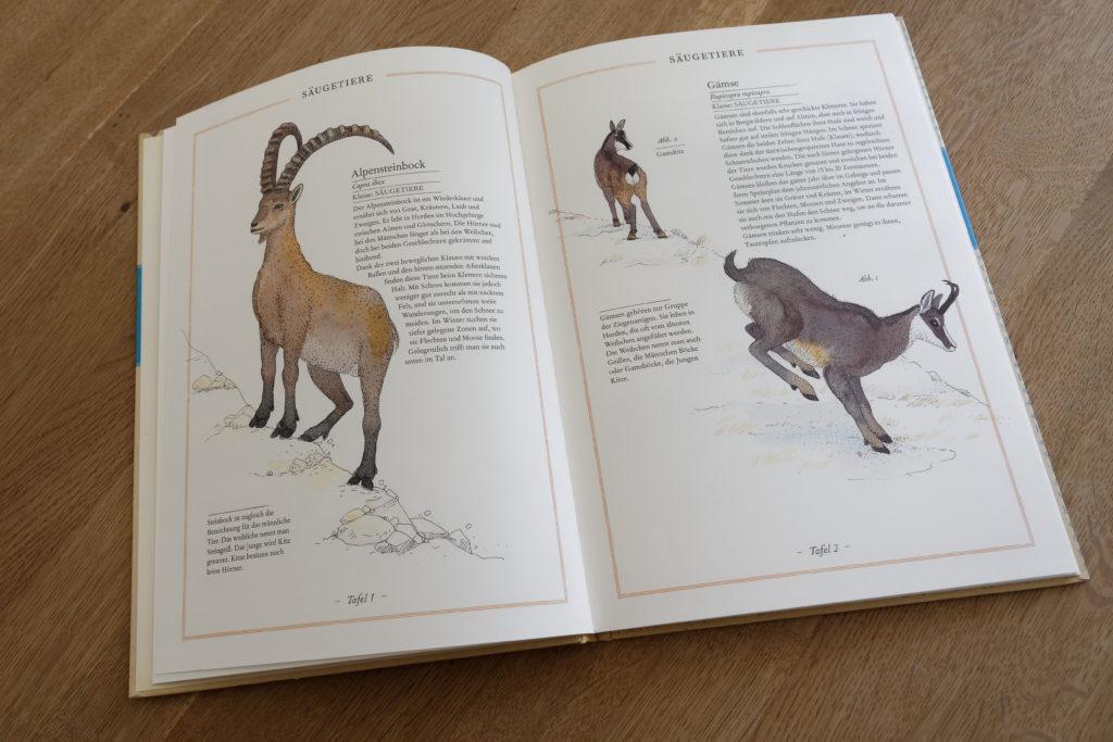 Kinderbuch Berge Bergführer