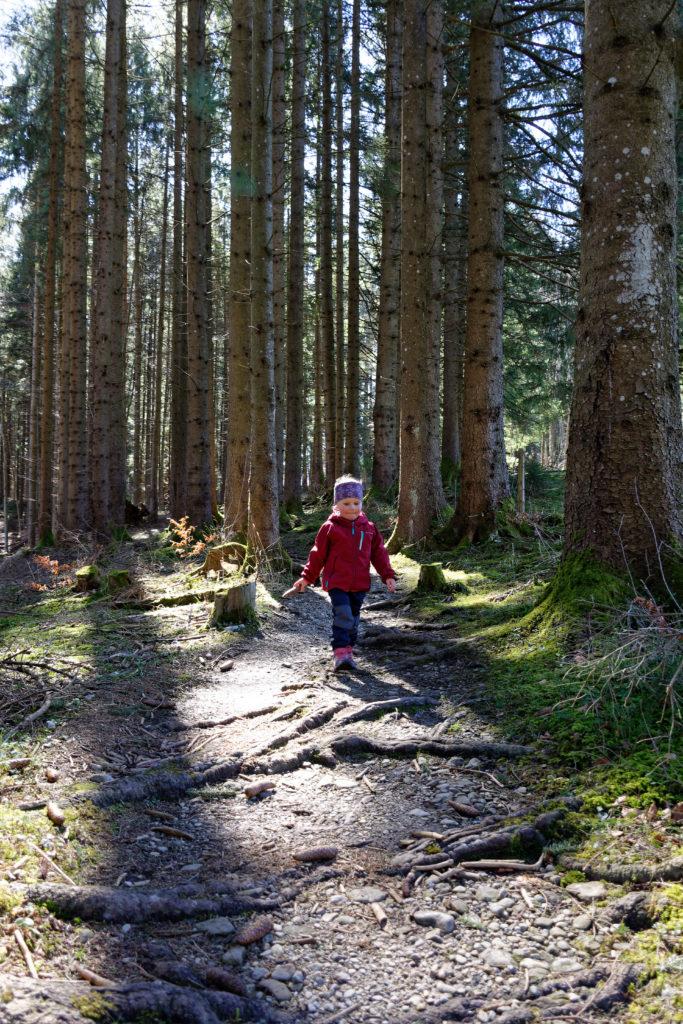 Wandern mit Kindern im Wald