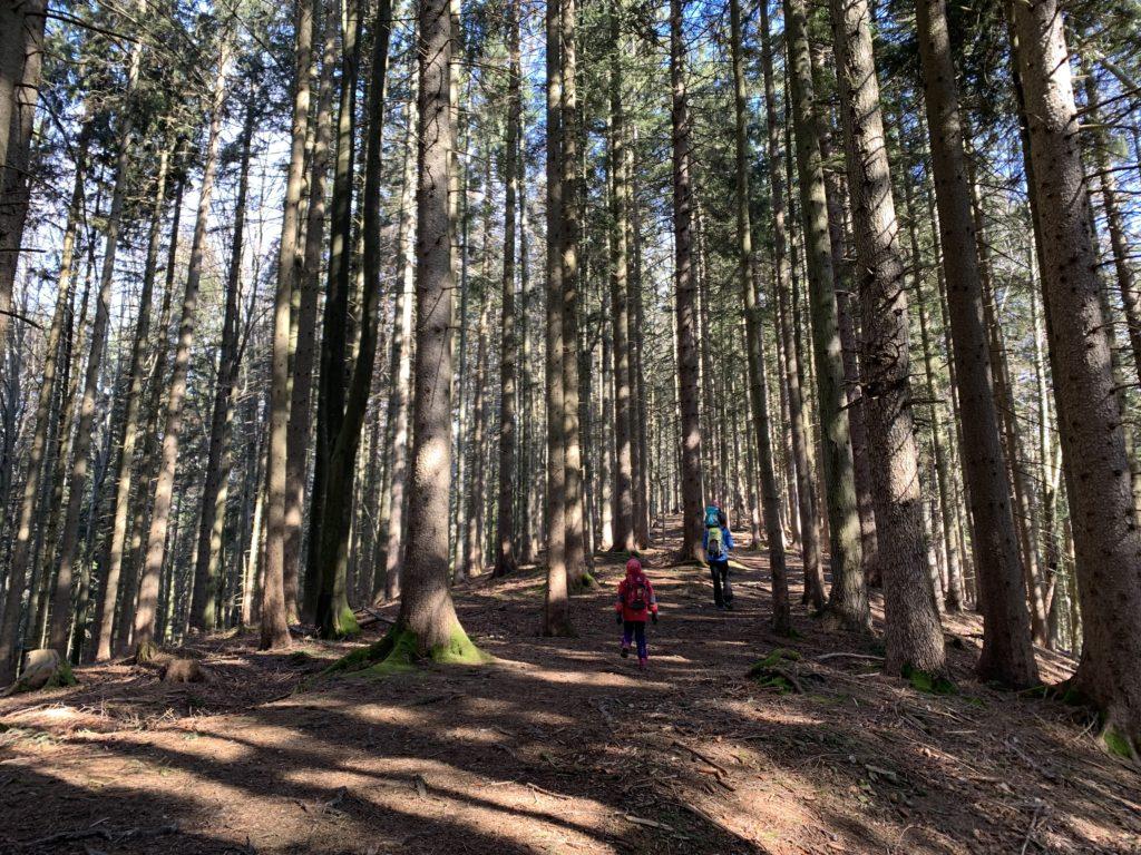 Wandern mit Kindern am Schliersee durch den Wald zur Schliersbergalm