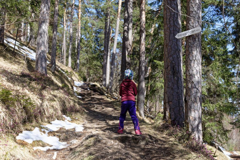 Durch den Bergwald bergauf zum Krepelschrofen